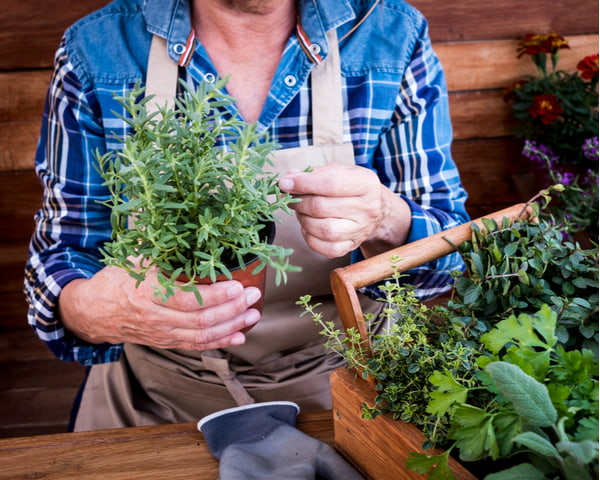 Senior woman gardening with plants and herbs